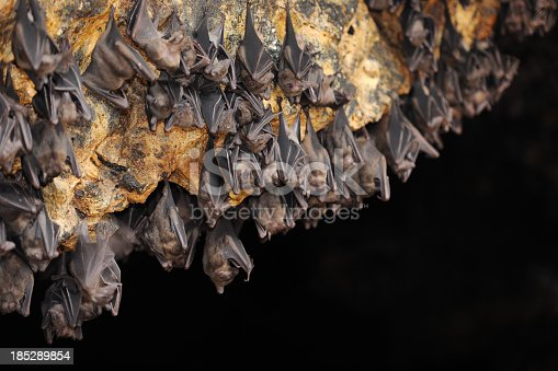 Huge Group of Bats in a Cave. Nikon D3X. Converted from RAW.