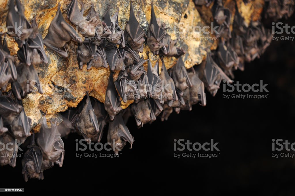 Huge Group of Bats in a Cave (XXXL) stock photo
