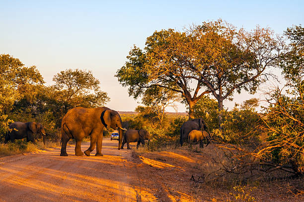 Gran rebaño de elefantes - foto de stock