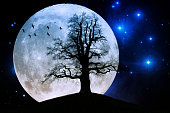 Huge old oak tree in front of full moon with birds and stars in the universe