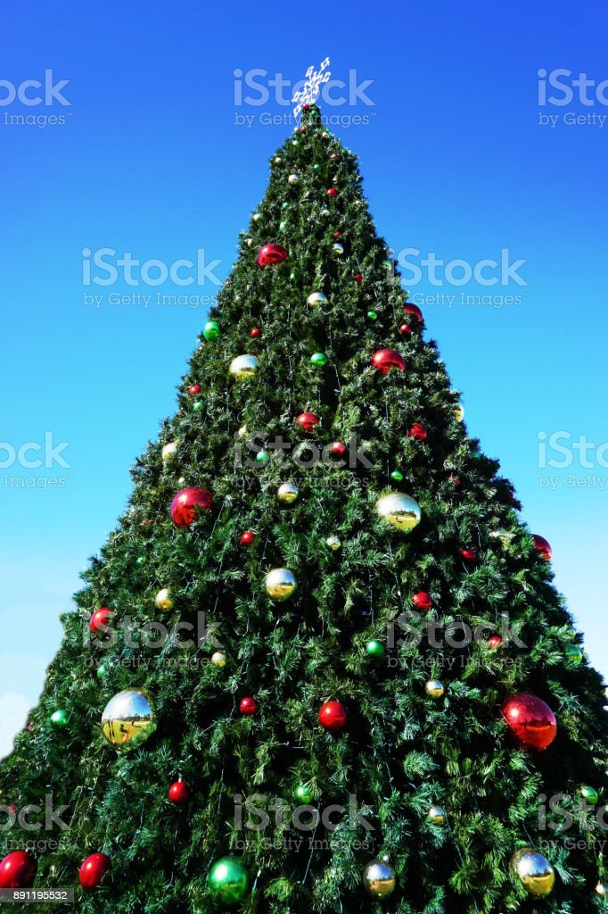 huge outdoor christmas tree royalty free stock photo
