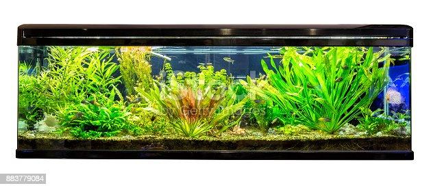 riesiges panorama aquarium mit tropischen fischen malawi buntbarsche und neonfische stock. Black Bedroom Furniture Sets. Home Design Ideas