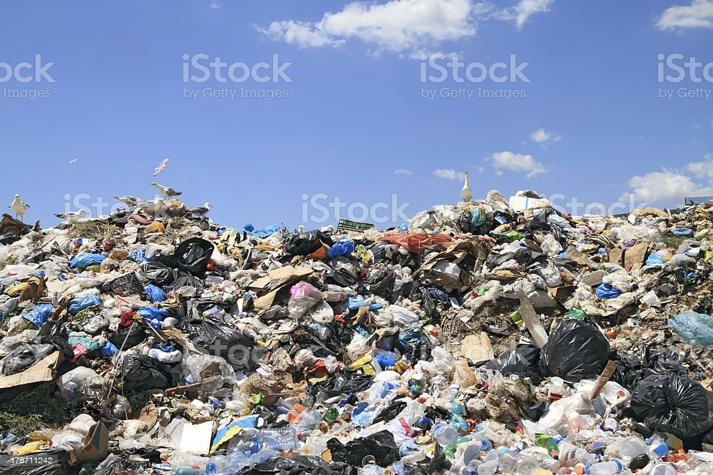 A huge pile of garbage with seagulls stock photo