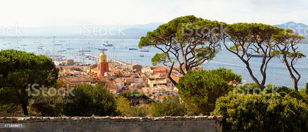 Huge Pine Trees above St. Tropez at the Cote D'Azur royalty-free stock photo