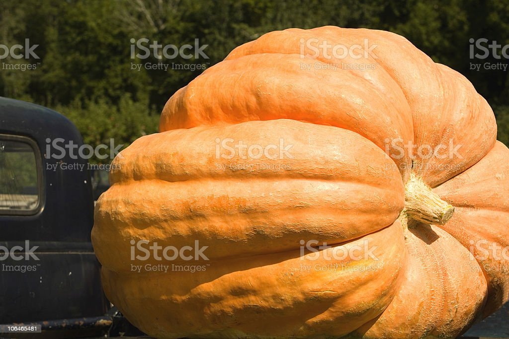 Huge Pumpkin stock photo
