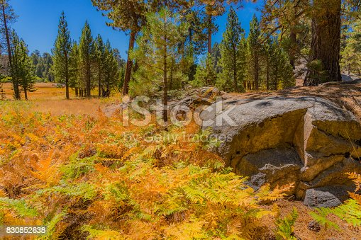 Bluff Lake Reserve, Autumn Ferns, split rock, autumn meadow, Big Bear Autumn, golden ferns