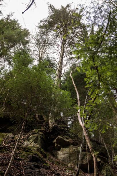 Riesige Felsen und hohe Bäume in der Schlucht mitten im grünen Wald – Foto