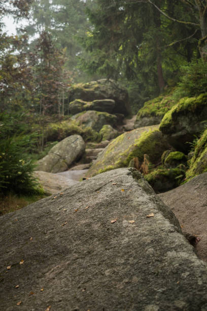 huge rocks in the forest - granite rock stock photos and pictures