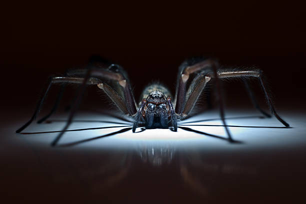 Huge spider in ambush picture id495470667?b=1&k=6&m=495470667&s=612x612&w=0&h=aemkg ma87 caxb6najenoqnbpxf3tfe8sdhbtnvgxq=