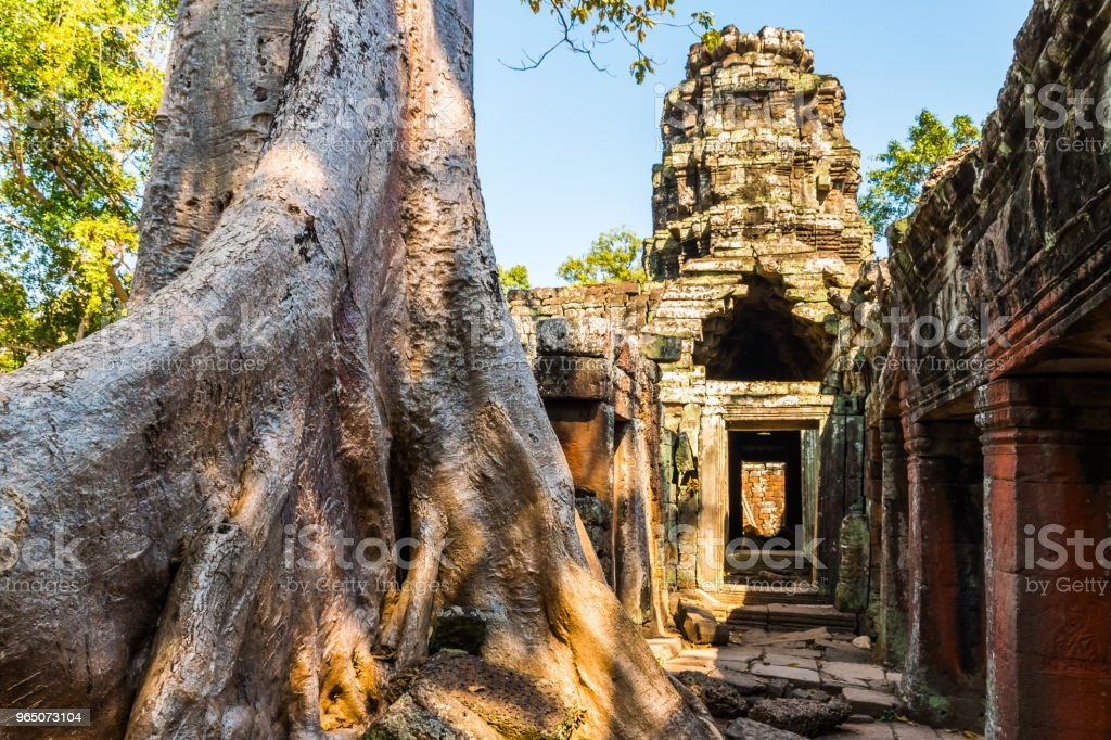 Huge tree and antient Banteay Kdei Temple in Angkor Wat complex, Cambodia royalty-free stock photo