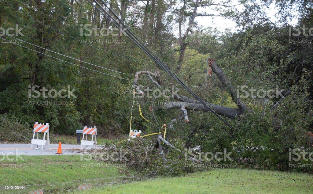 Riesiger Baum nach unten über Stromleitungen in North Carolina nach Hurrikan Florence – Foto
