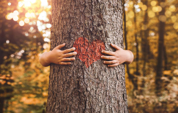 hugging a tree - sustainable living stock pictures, royalty-free photos & images