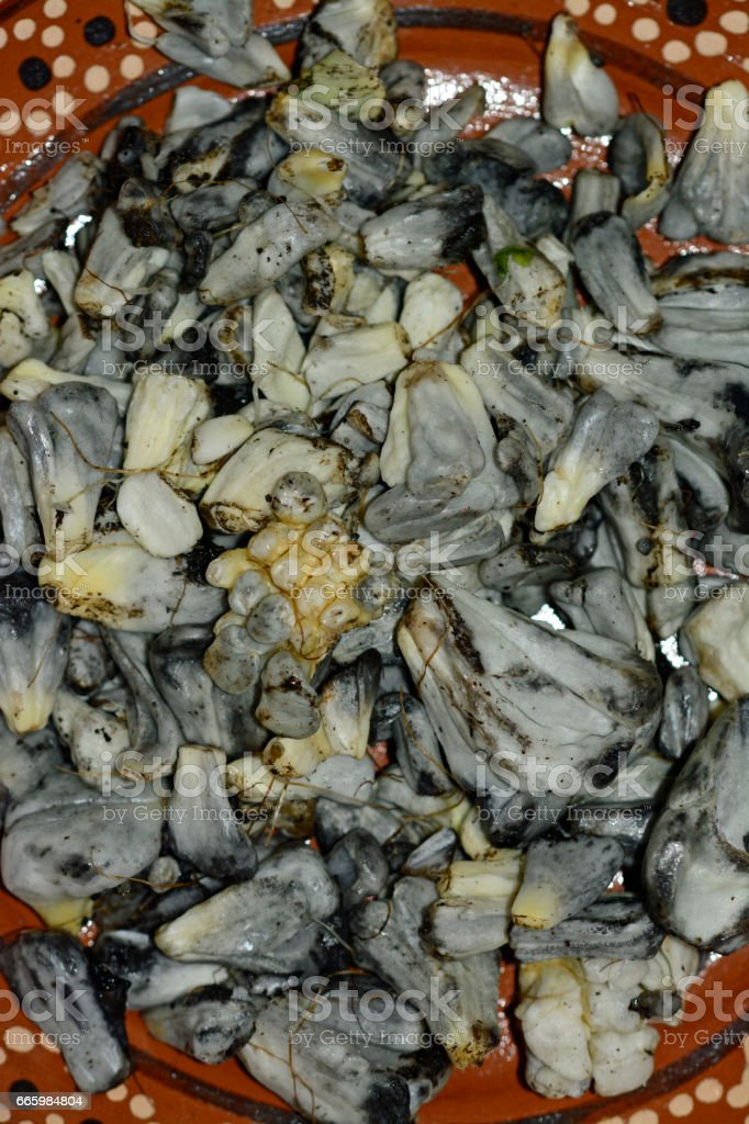 Huitlacoche, mexican traditional edible mushroom stock photo
