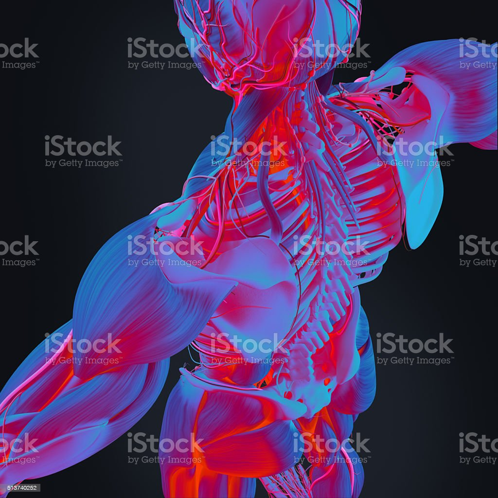 Human anatomy 3D futuristic scan technology.Back and spine. Infrared heat. stock photo