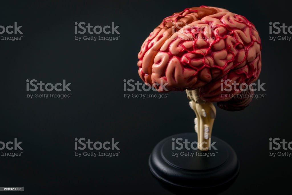 Human anatomy and brain health concept stock photo