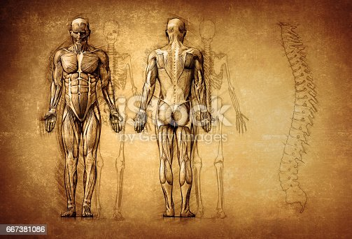 istock human anatomy drawing, old, canvas 667381086
