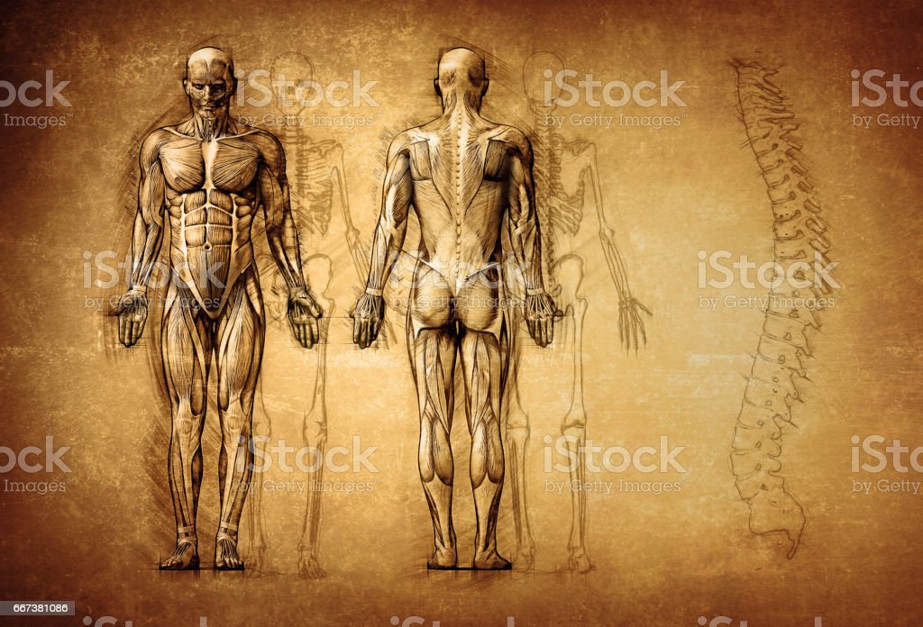 human anatomy drawing, old, canvas stock photo