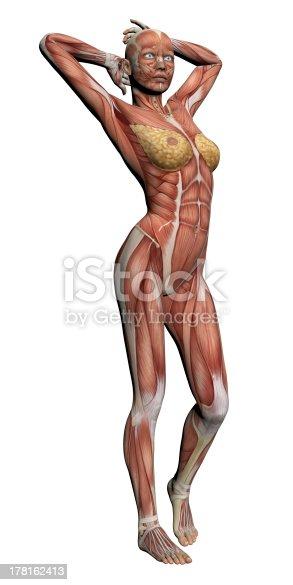 135895161istockphoto Human Anatomy - Female Muscles 178162413
