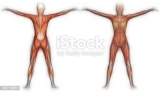 istock Human Anatomy - Female Muscles 502118614