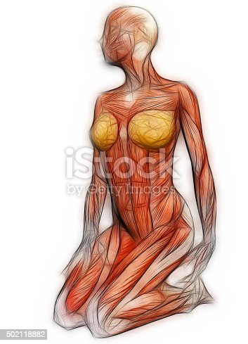 135895161istockphoto Human Anatomy - Female Muscles 502118882