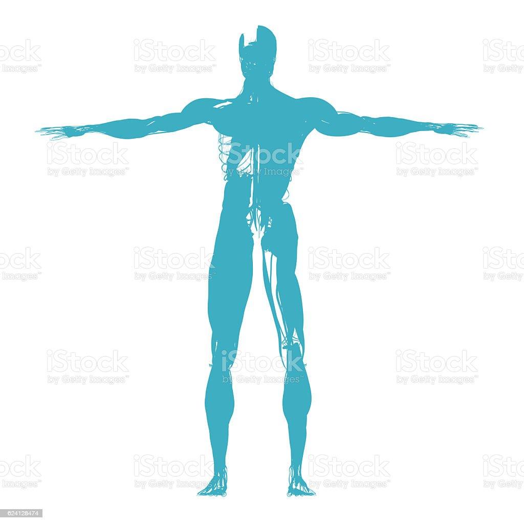 Human Anatomy Health Sillhouette Outline 3d Illustration Stock Photo ...
