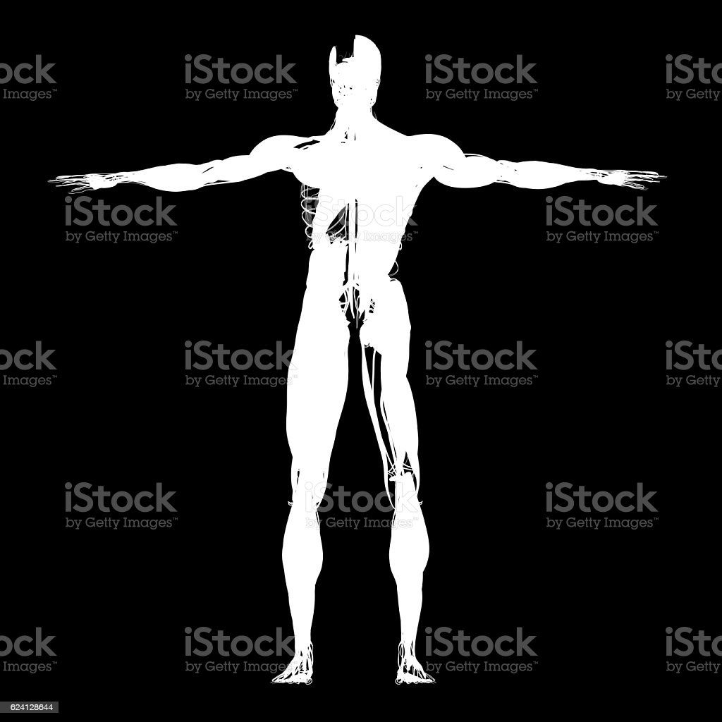 Human anatomy, health, sillhouette, outline. 3d illustration stock photo