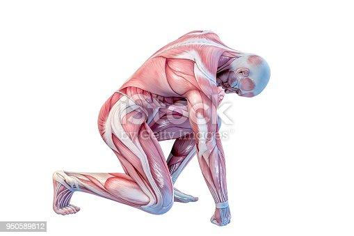 istock Human Anatomy - Male Muscles. 3D illustration. 950589812
