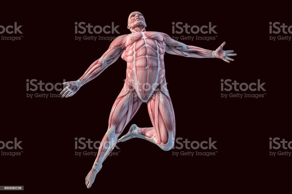 Fotografía de Anatomía Humana Músculos De Hombres Ilustración 3d y ...