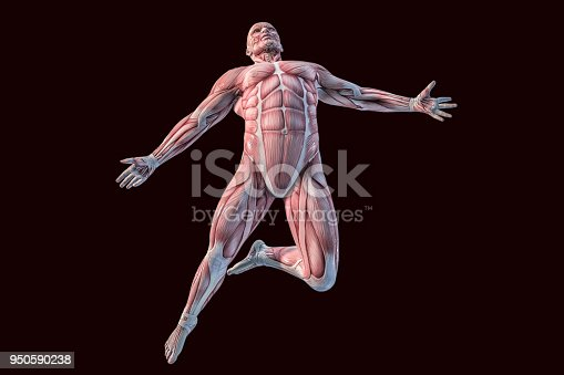 istock Human Anatomy - Male Muscles. 3D illustration. 950590238