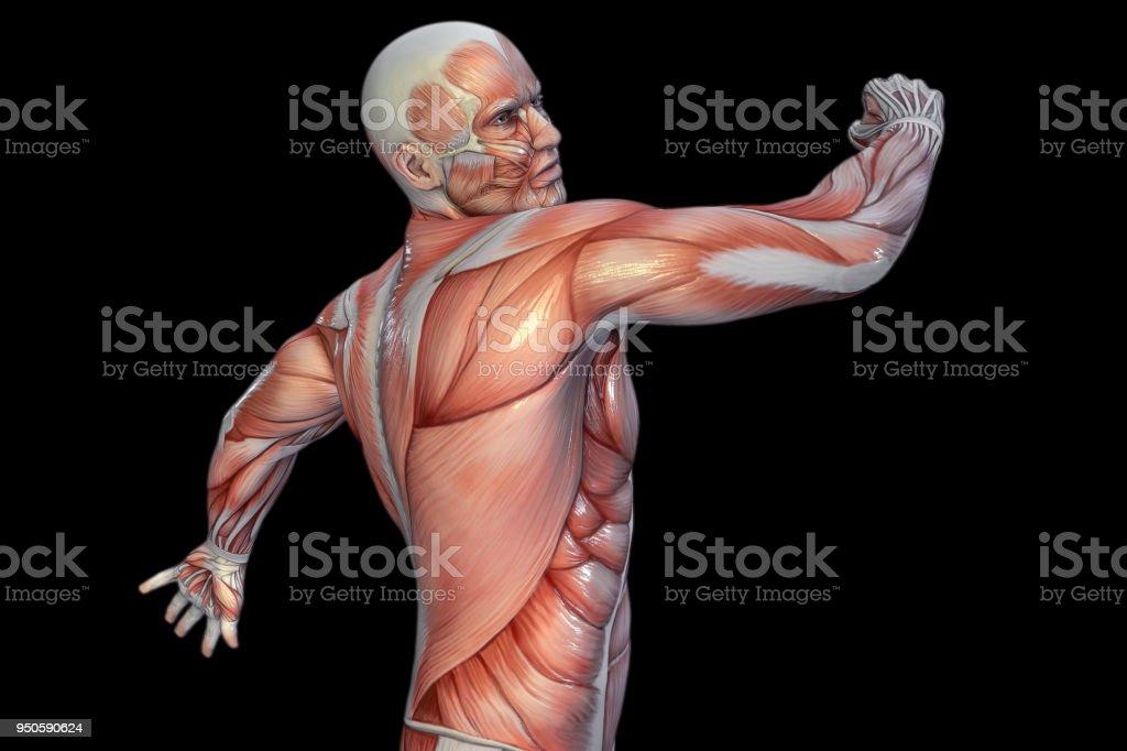 Atractivo Grises Episodios Reloj Anatomía Composición - Anatomía de ...