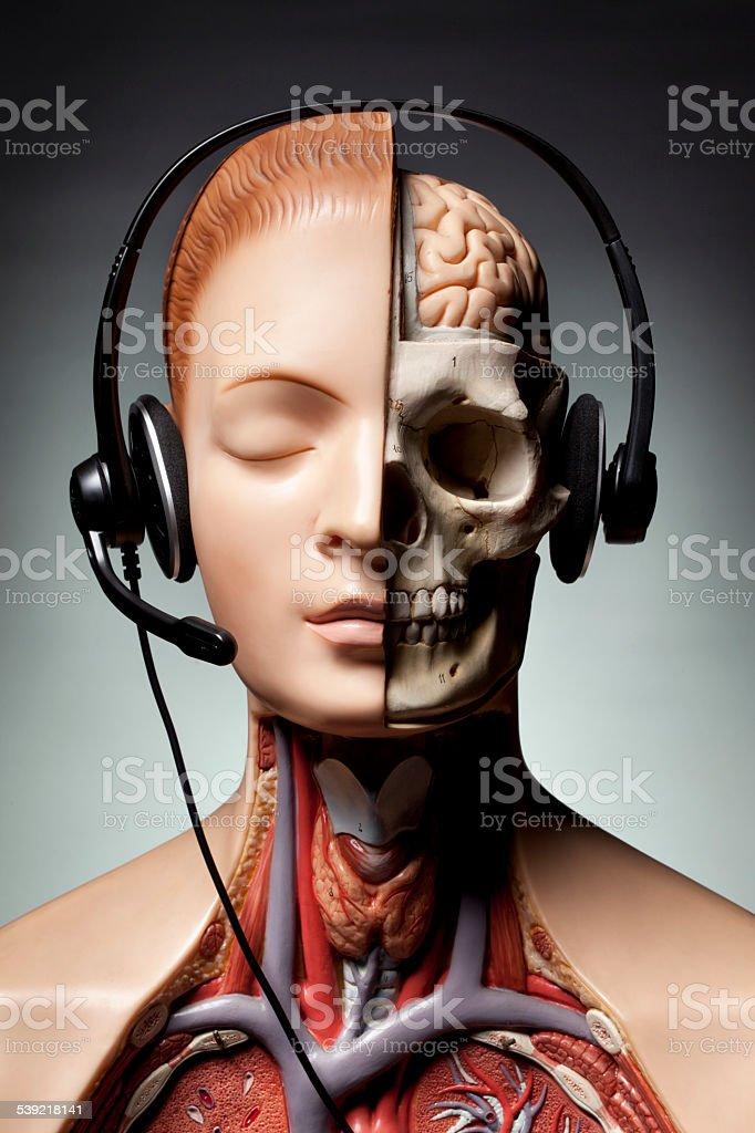 Human anatomy model with headphones stock photo
