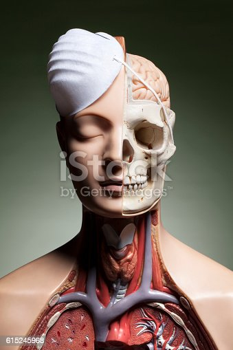 istock Human anatomy model with protective face mask 615245968