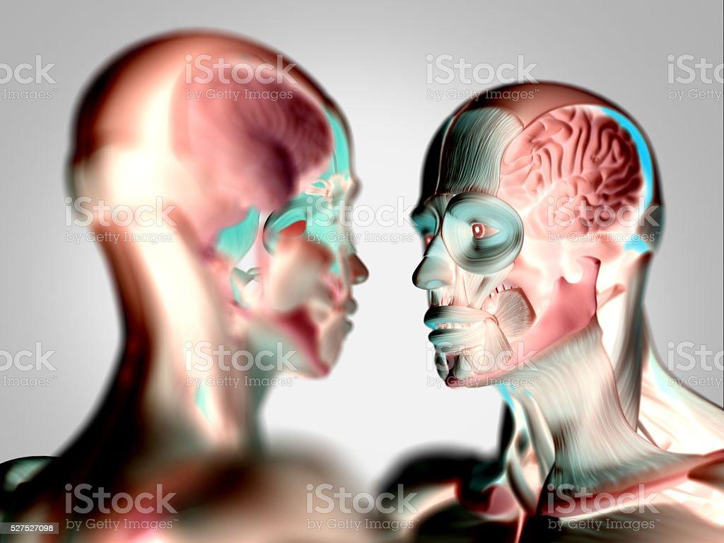Menschliche Anatomiemodelle Frau Und Mann Schaut An Jede Andere ...