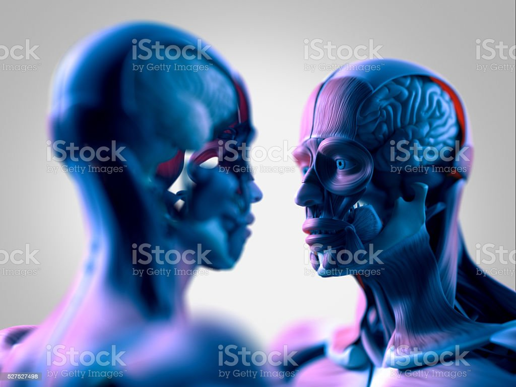Human Anatomy Modelswoman And Man Looking At Each Other Stock Photo ...