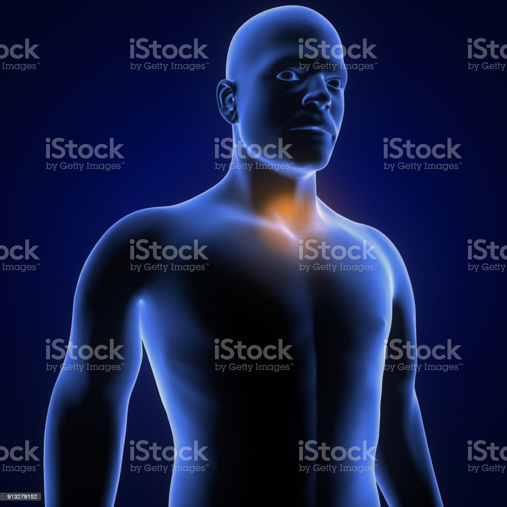 Human Anatomy Neck Pain In Red 3d Illustration Stock Photo & More ...
