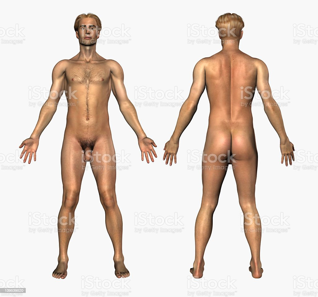 Human Anatomy Nude Male Front Back Stock Photo & More Pictures of ...