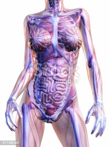 istock Human Anatomy 517482307