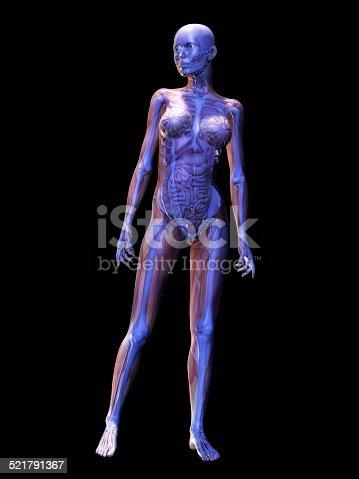 istock Human Anatomy 521791367
