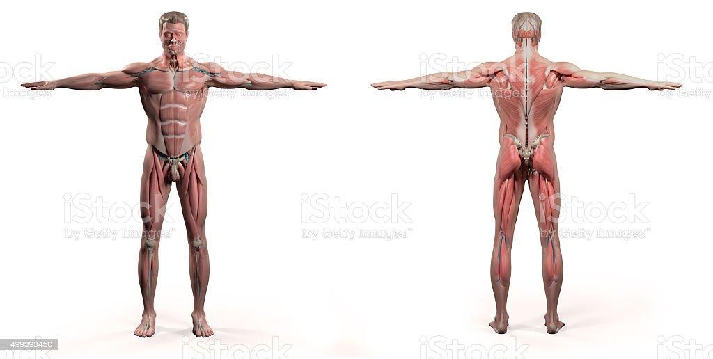 Tolle Bewegungen Des Körpers Anatomie Galerie - Anatomie Ideen ...