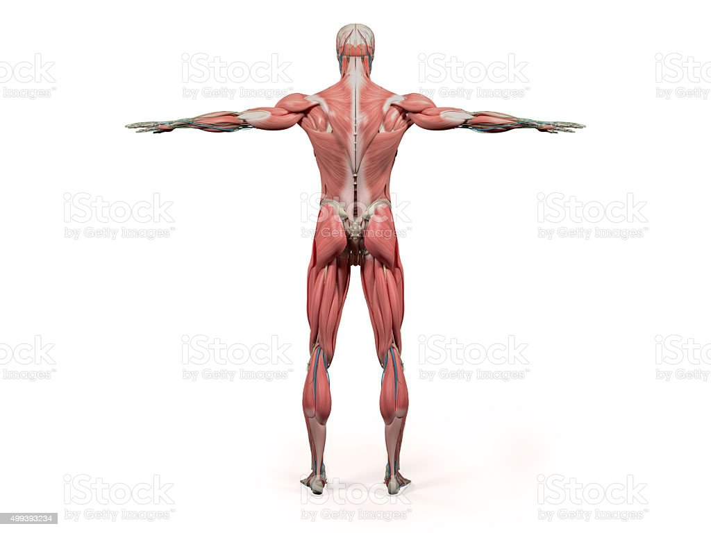 Fantastisch Anatomie Des Ganzen Körpers Fotos - Menschliche Anatomie ...