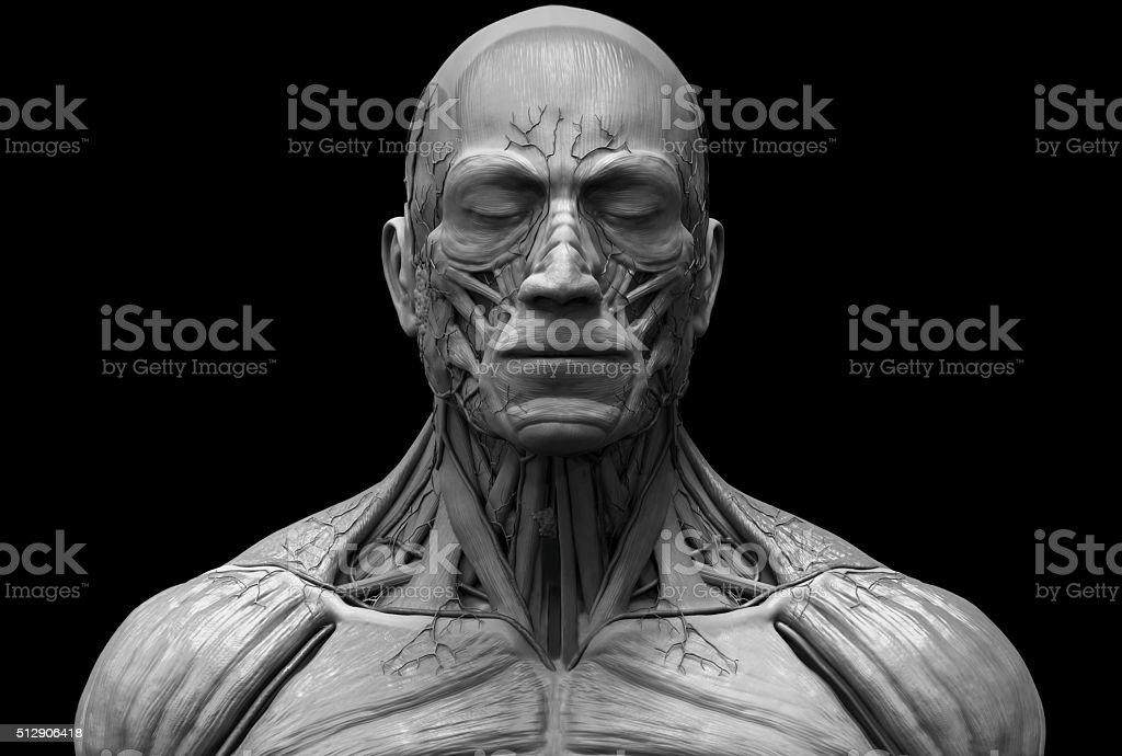 Foto De Estrutura Anatomia Do Homem Em Preto E Branco E Mais