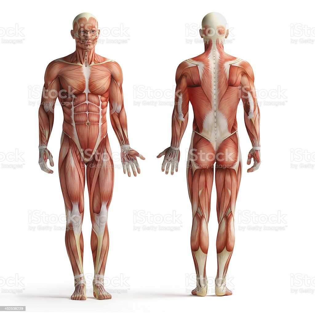 Menschliche Anatomie Blick Stock-Fotografie und mehr Bilder von ...