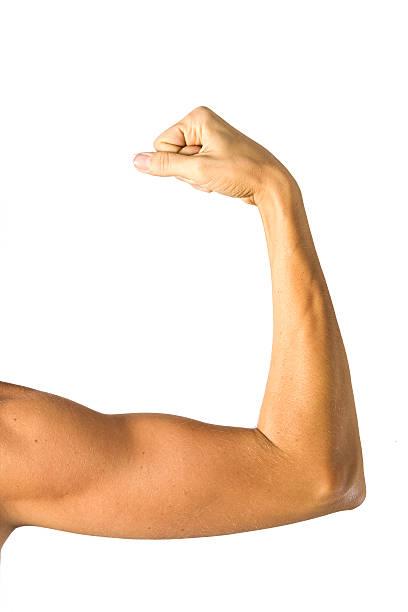 人間の腕構造 ストックフォト