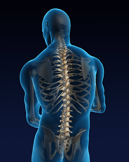 Human back  spine body part stock pictures, royalty-free photos & images