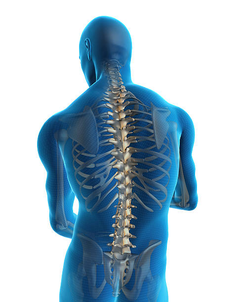 Human back Human back with a visible spine spine body part stock pictures, royalty-free photos & images