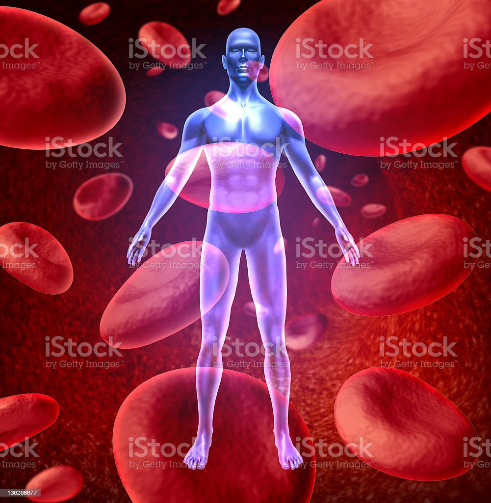 Human blood circulation stock photo