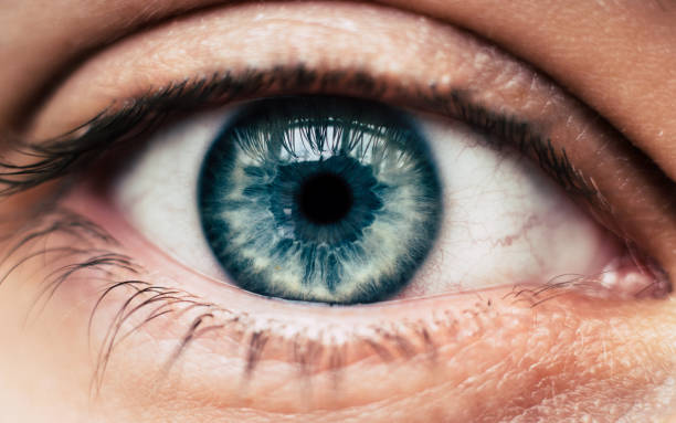 human blue eye - eye stock pictures, royalty-free photos & images