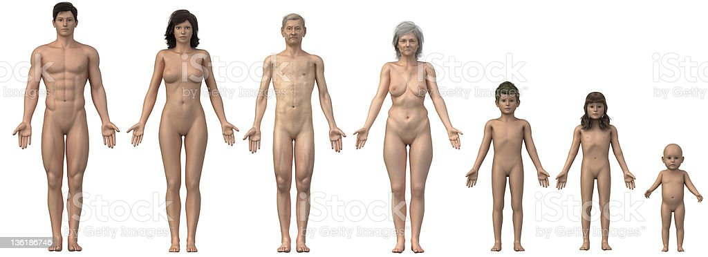 Human bodies in anatomical position - whole family royalty-free stock photo