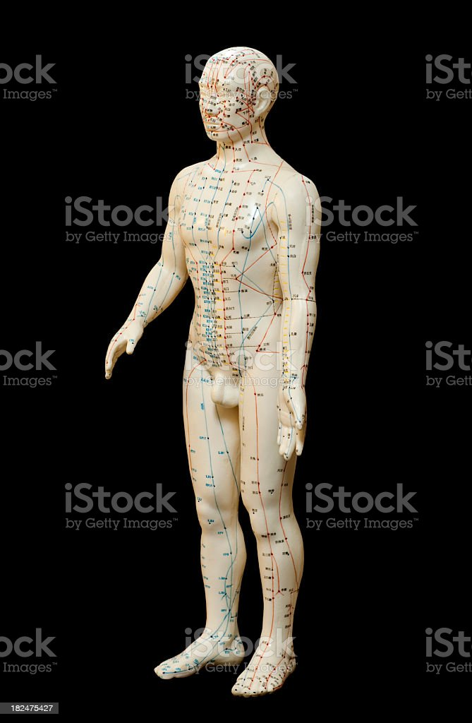 Human Body Acupuncture Model royalty-free stock photo