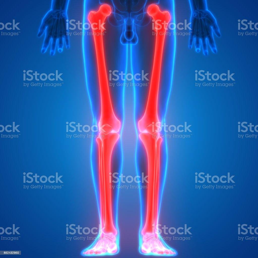Menschlichen Körper Knochen Gemeinsame Schmerzen Anatomie Stock ...
